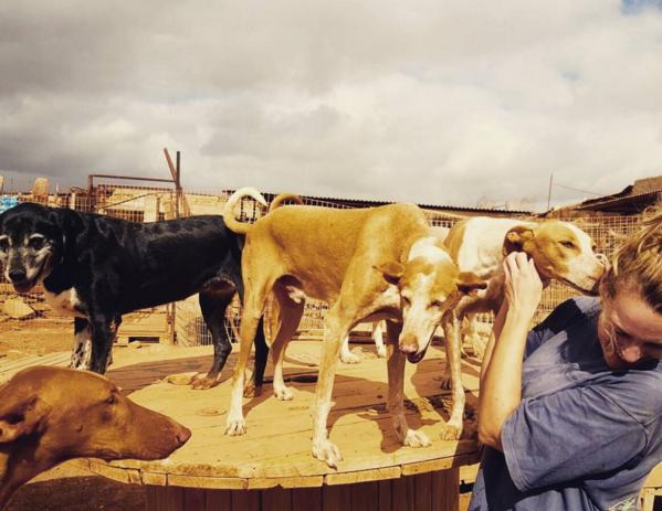 Fuerteventura-fuertedogs-reizende-vegetarier