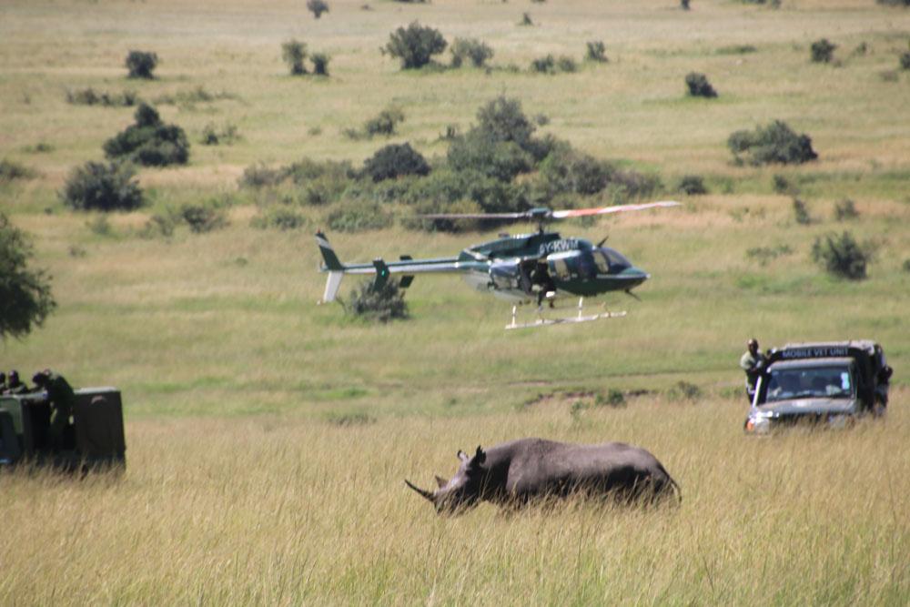 masai mara neushoorn